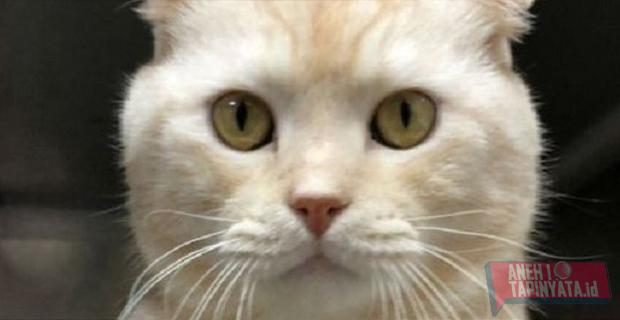 Fakta Penemuan Kucing Bermata Satu dan Bertanduk